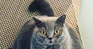 gatto scoliosi