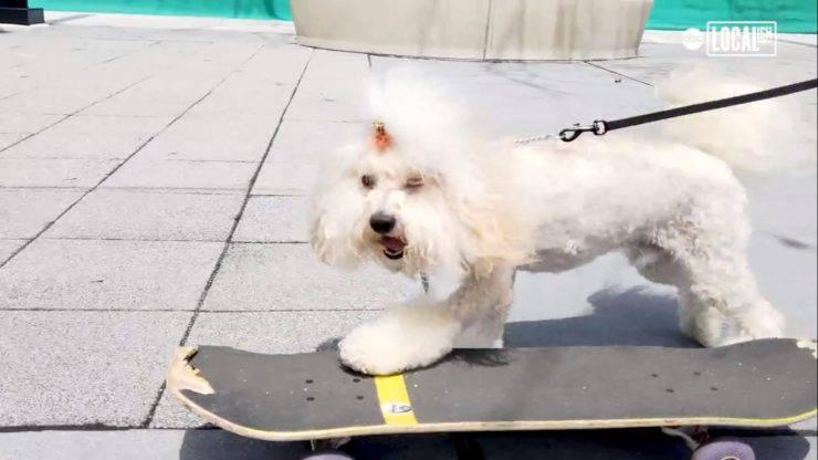 cane skateboard