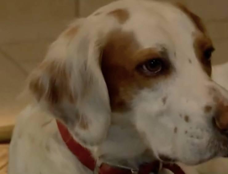 Cane finisce in prigione