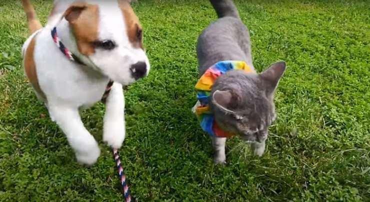separazione cane gatto