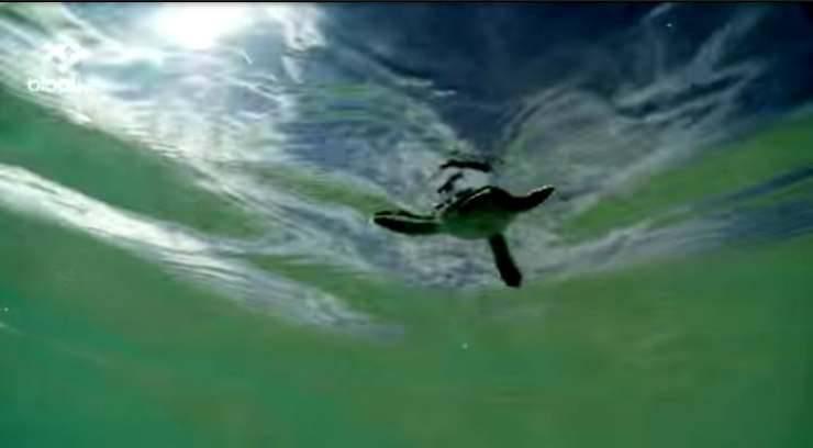 tartaruga che nuota Facebook