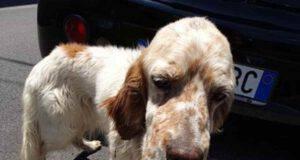 cane abbandonato provinciale
