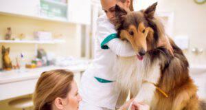 analisi del sangue al cane