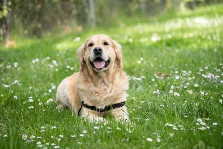Nomi mitologici per cane femmina