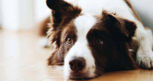 Accudire un cane sterilizzato
