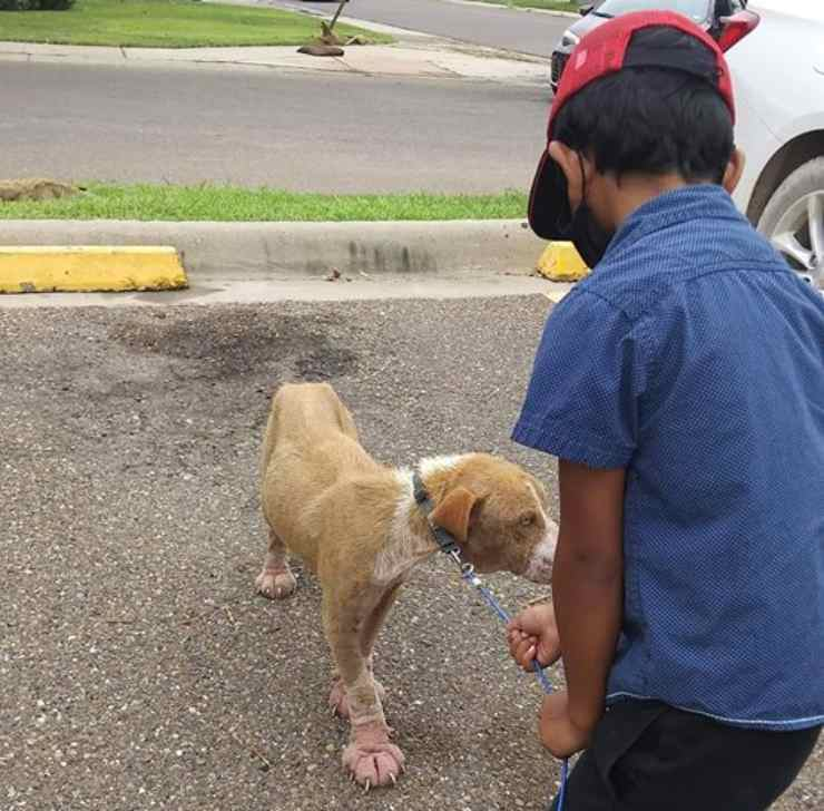 cane randagio salvato bambino