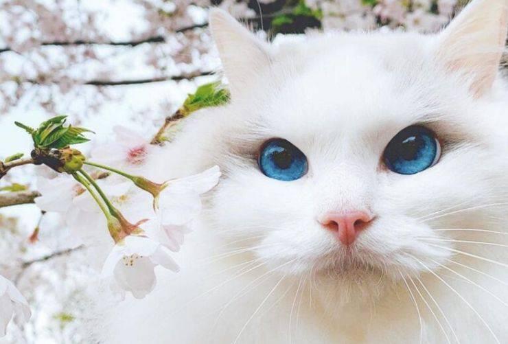gatto occhi blu video
