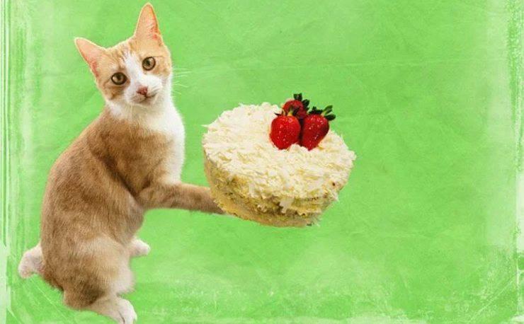 data di nascita gatto