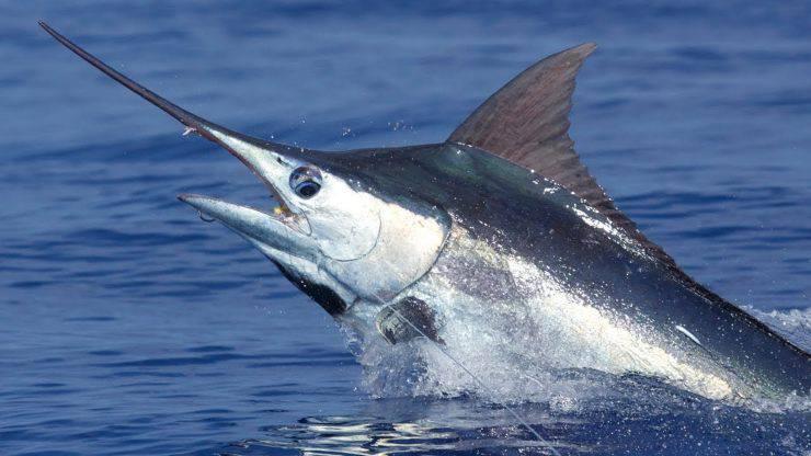 Creature marine di colore blu