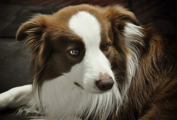 miti cani rifugi