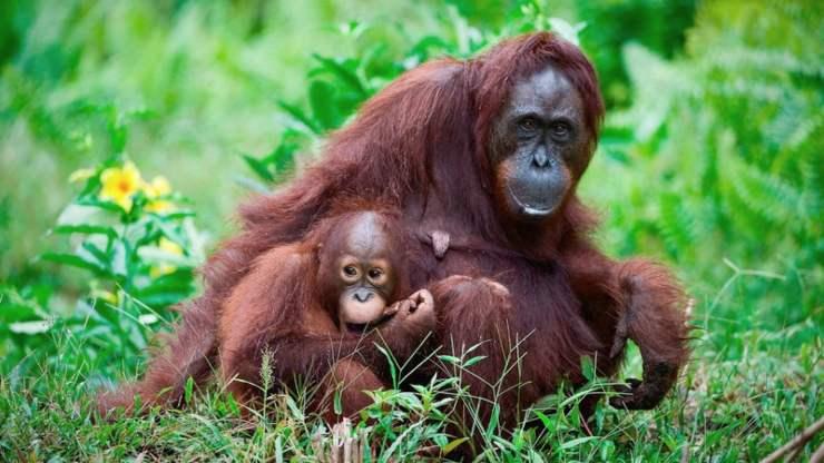 Animali del Borneo