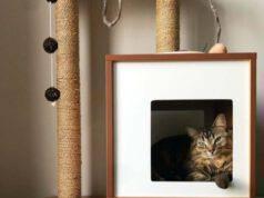gatto giocare scatole