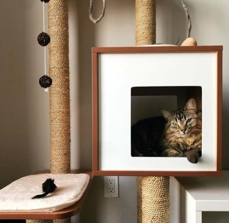 gatto scatole