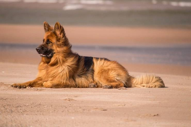 Protezione solare al cane