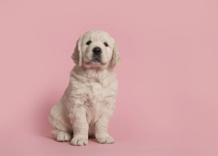 Il cucciolo trattiene la pipì: per quanto tempo