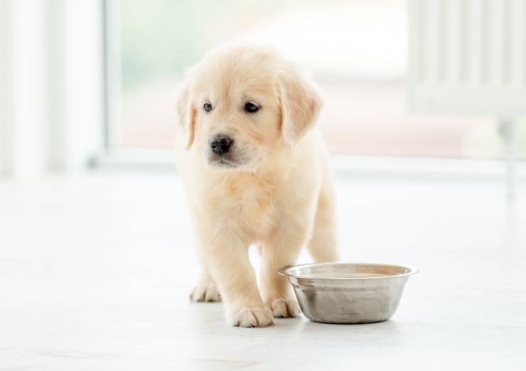Il cane può mangiare l'aglio?