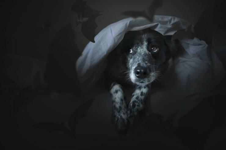 I cani vedono al buio