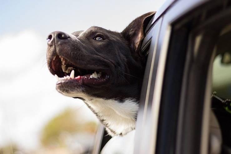 lasciare cane auto