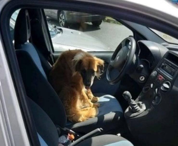 cane chiuso auto sole