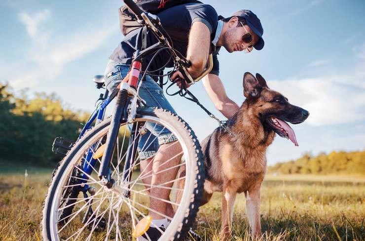 guinzaglio cani biciclette