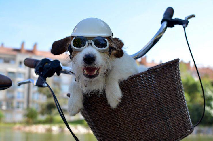 Rimorchi per bicicletta cestini per cani