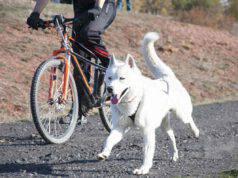 Andare in bici con il cane