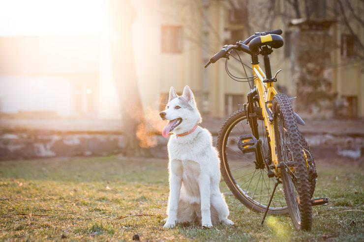 Fido potrebbe non tenere il passo con una bicicletta