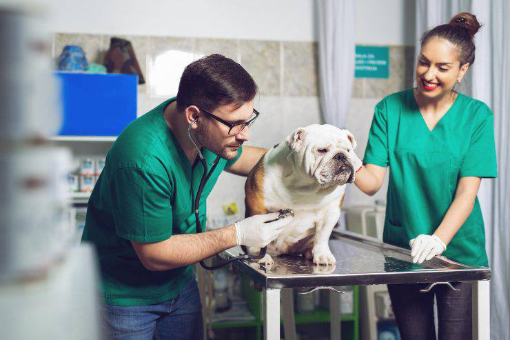 cane dal veterinario