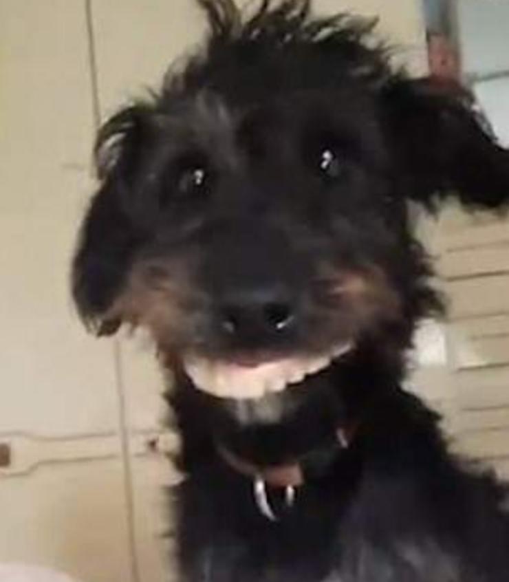 Cucciolo ruba dentiera