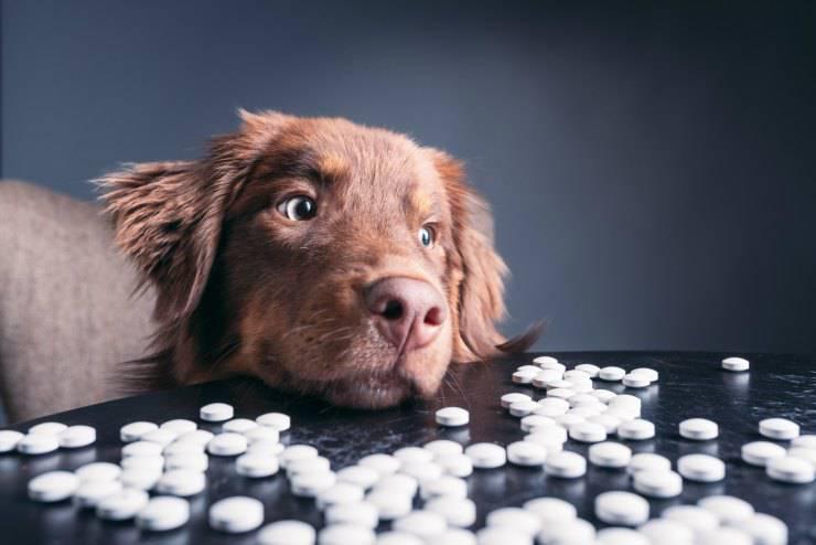 Cani e droghe