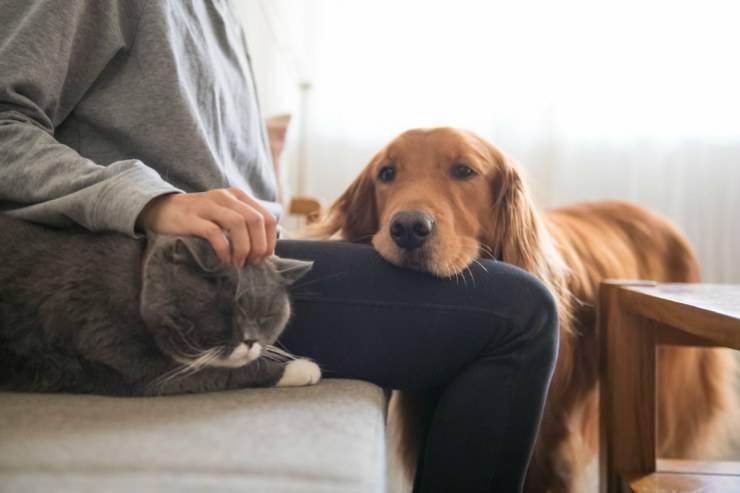 Padroni di cani o di gatti