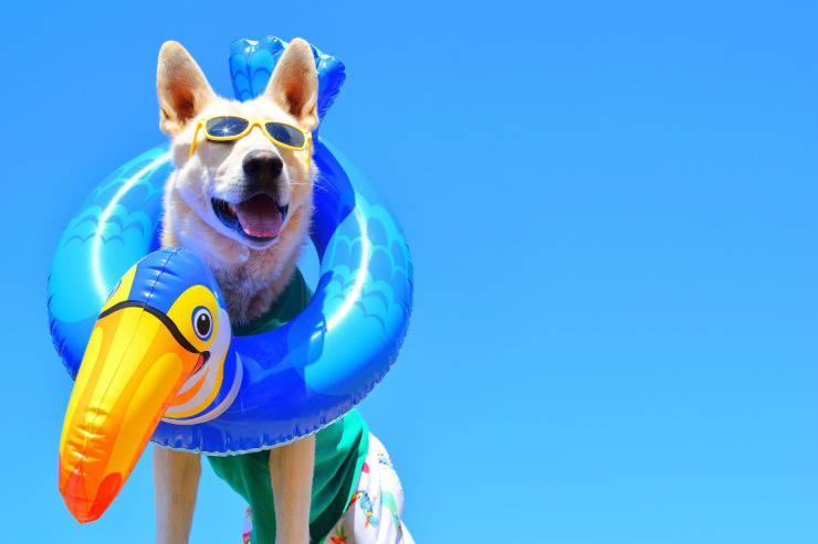 Il cane può fare il bagno in mare