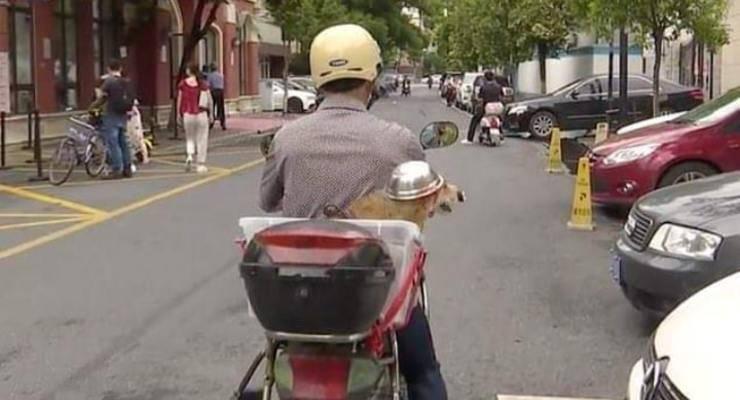 Cane con il casco