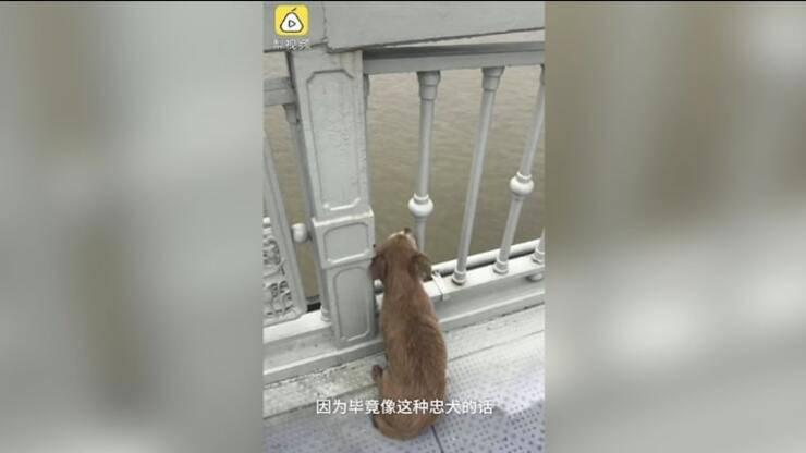 cane aspetta il ritorno del padrone