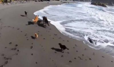 cane salvati libertà mare