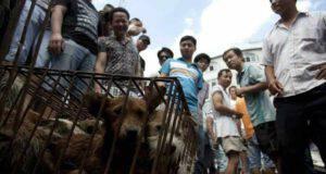 Festival Yulin