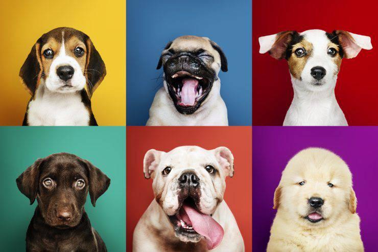 Scegliere una razza di cani in base al nostro modo di vivere e abitudini