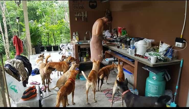 Adotta tutti i cani dell'isola