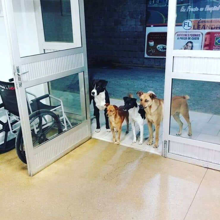 Cani aspettano senzatetto in ospedale