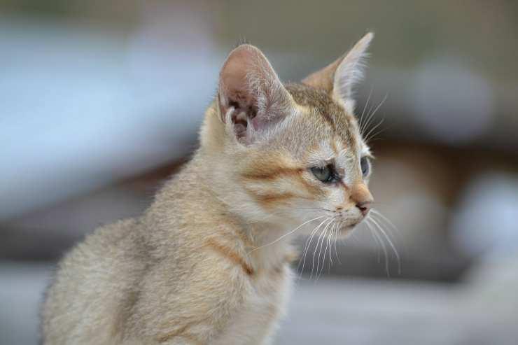 Un micio nella foto (Foto Pixabay)
