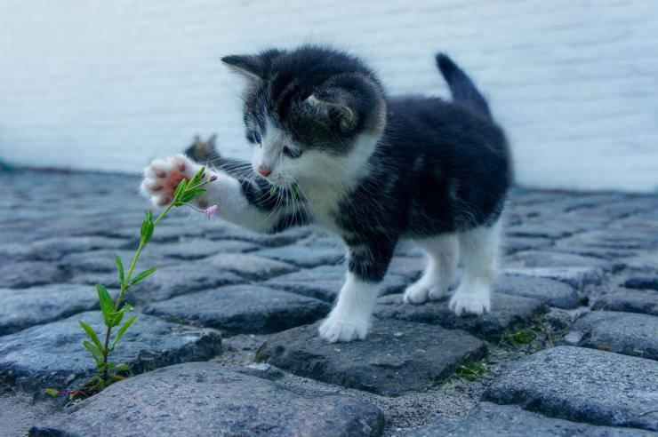 Il gatto non cresce