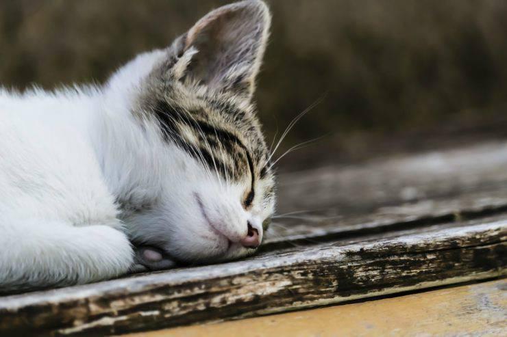 I gatti sognano