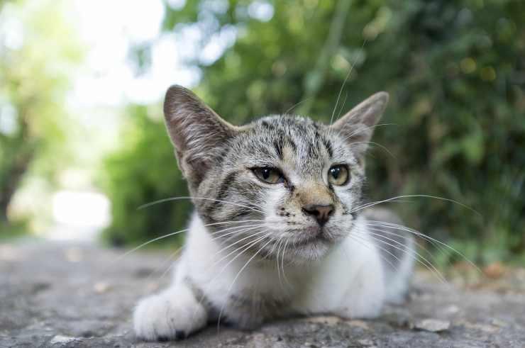 Gattino triste (Foto Pixabay)