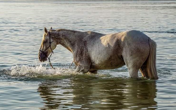 muore ragazzo di 23 anni per salvare un cavallo