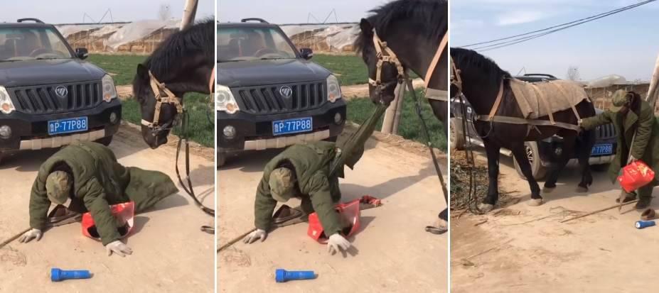 cavallo aiuta padrone