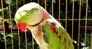 colpo di calore nel pappagallo