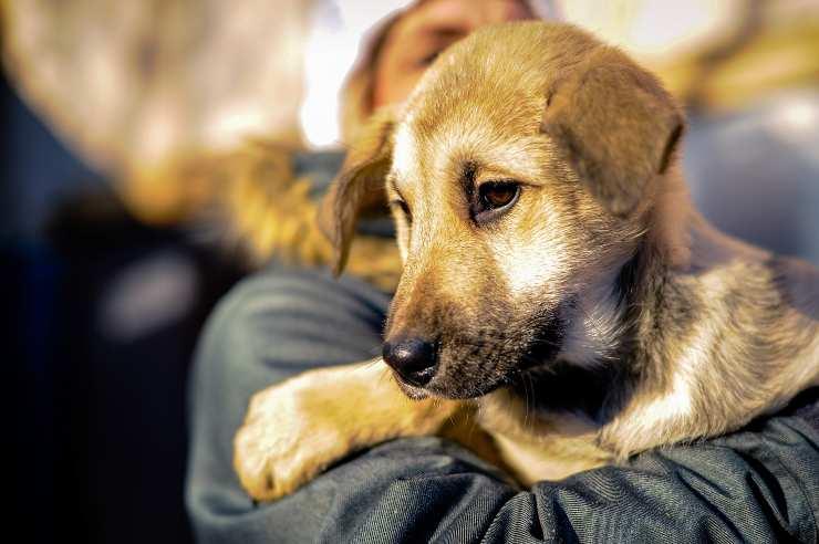 Come prendersi cura di un cane abbandonato