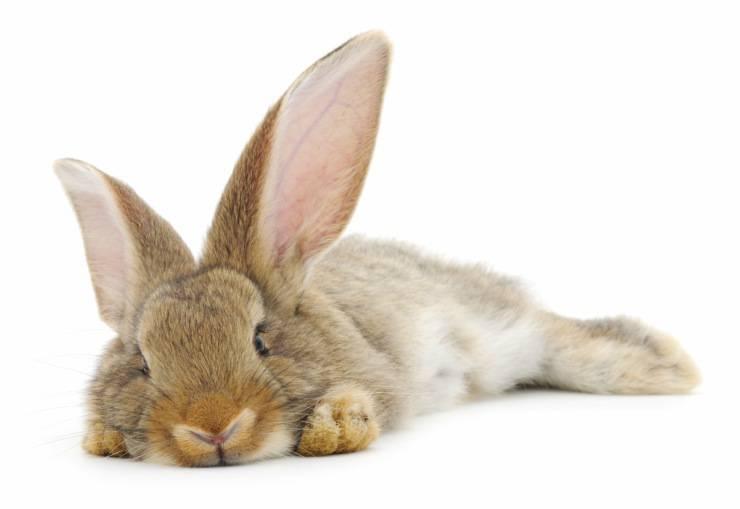 Il coniglio si sente solo