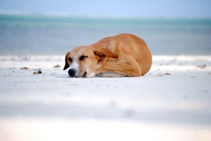 Come dorme il cane