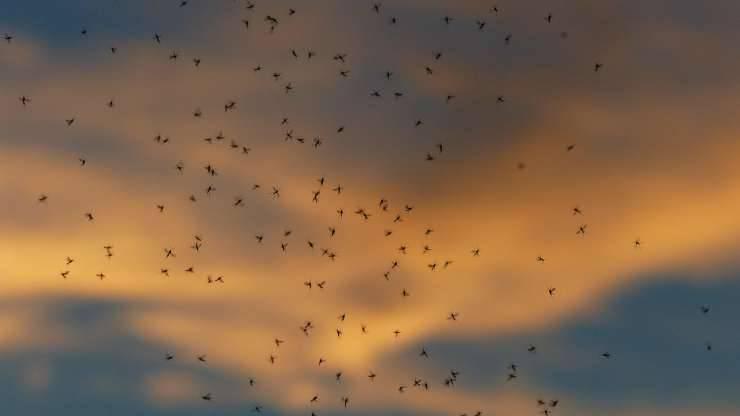 zanzare in cielo (Foto Pixabay)